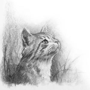 Ouap_Cat
